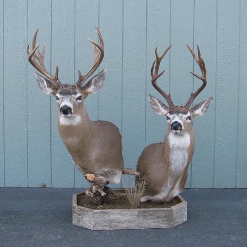 Two Buck