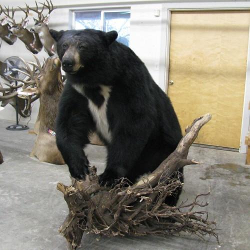 Life Size Bear