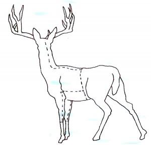 deer-cuts